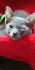 Kitten 8 Wochen alt